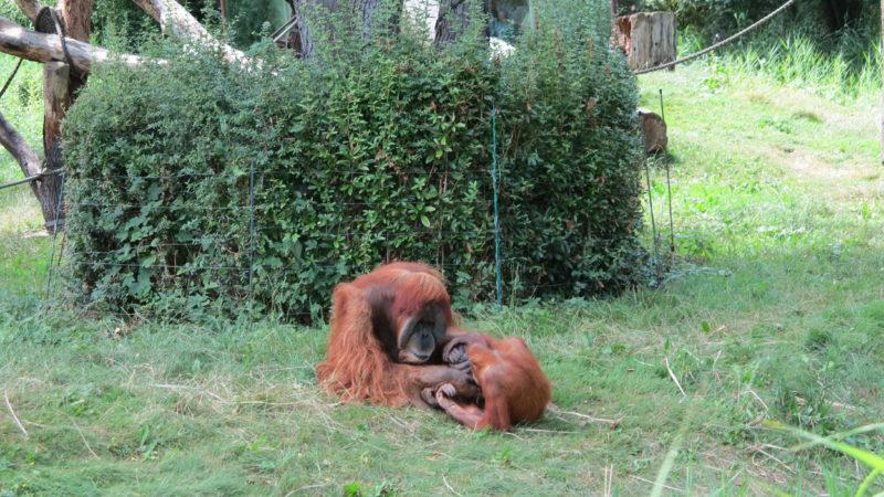 Zoo Leipzig © Ludin 2016