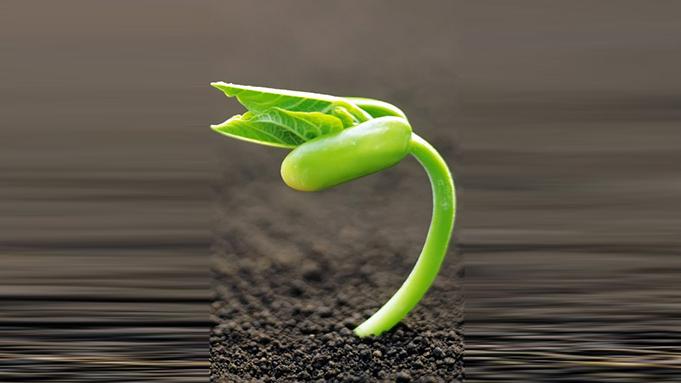 An der Muba Gedanken pflanzen.| Bild zVg