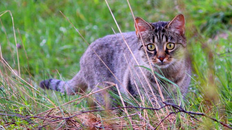 Katze im Freien.| © Christina Schmid / pixelio.de