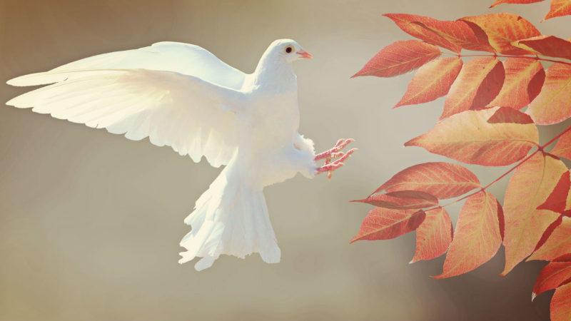 Friedenstaube | © pixabay.com CC0