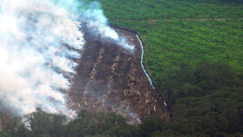 Fastenopfer und BRot für alle startetn Petition  | © gegen Palmöl-Verschleiss screenshot youtube