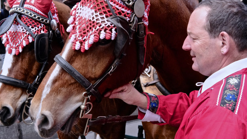 Pferde gehören zum Sechseläuten. | © Oliver Sittel