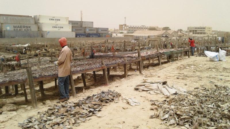 Fische trocknen in Mauretanien | © zVg Kirche in Not