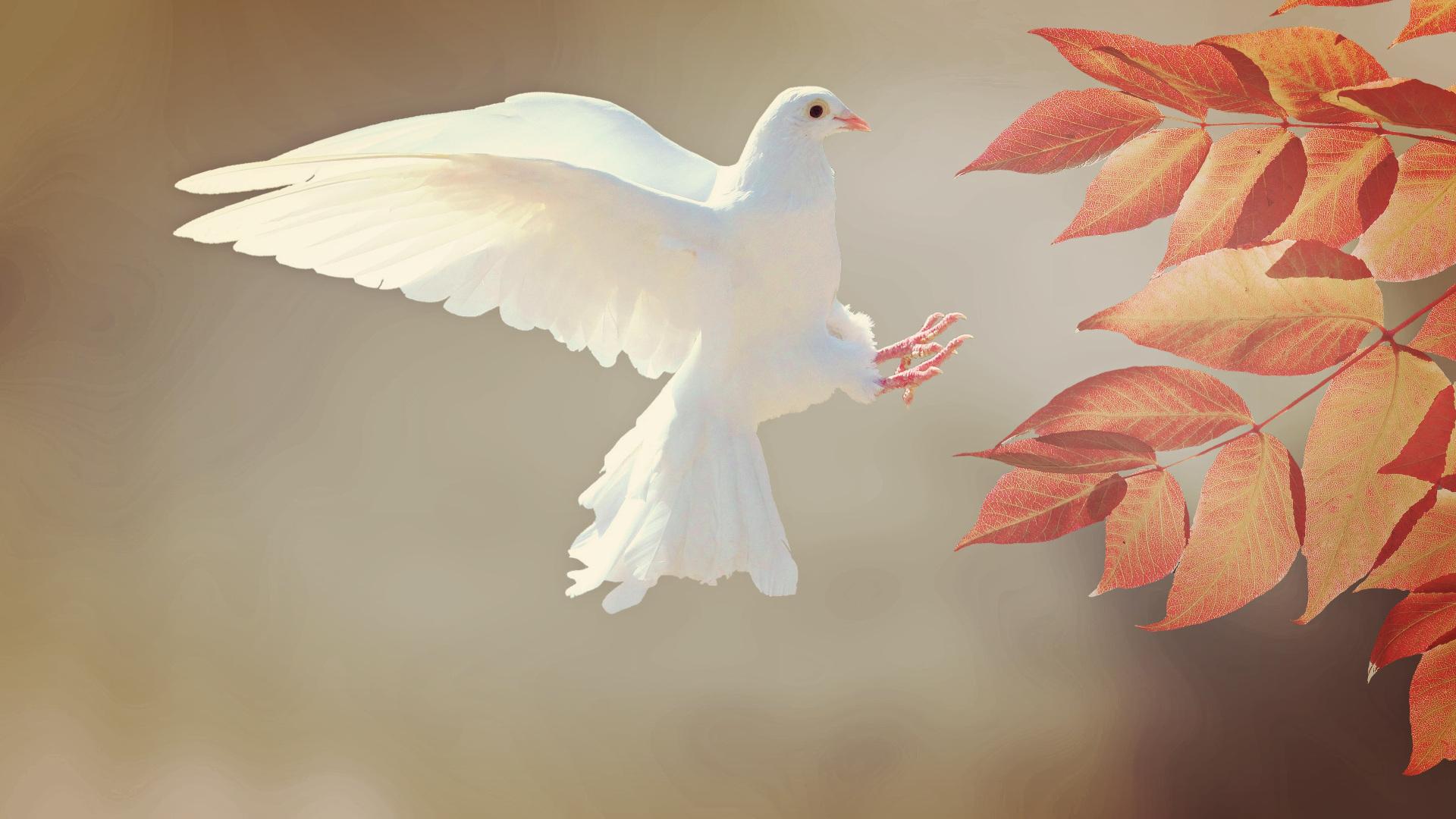 Taube als Zeichen des Friedens | © pixabay.com CCO