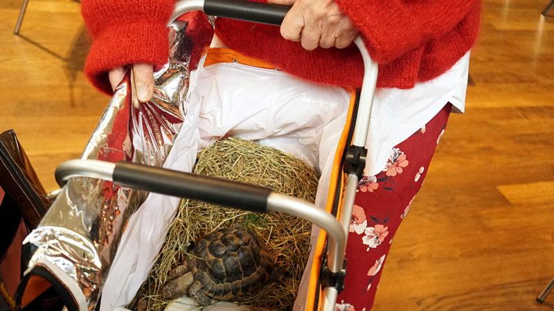Die Schildkröten Rös (im Bild) und Konstantin verlassen den Segungs-Gottesdienst  | © Vera Rüttimann