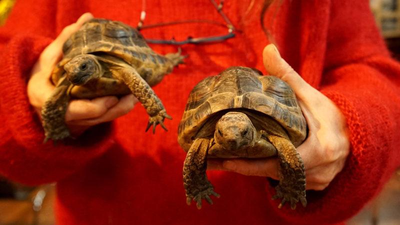 Zwei Schildkröten warten auf den Segen von Pfarrer Schaar  | © Vera Rüttimann