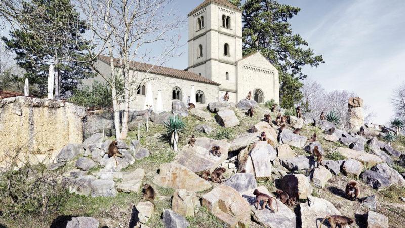 Die Martinskirche stünde heute im Zoo Zürich | © Amt für Städtebau Zürich