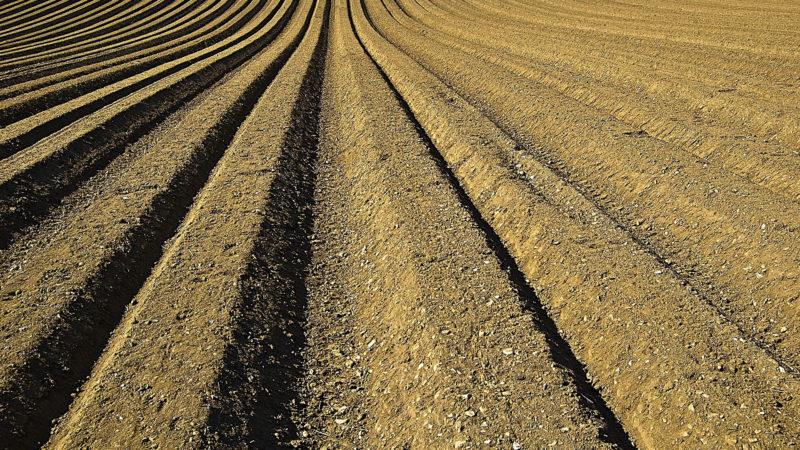 Bearbeitete Erde | © pixabay CC0