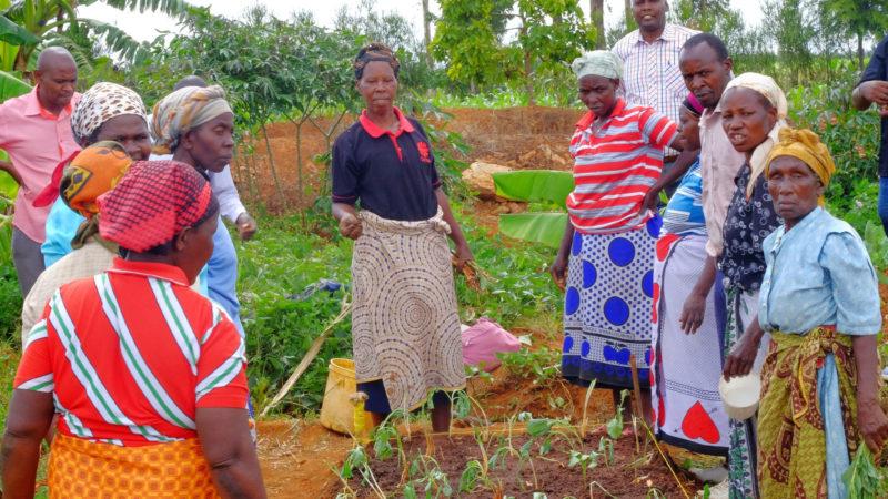 Elizabeth Diyala, Kleinbäuerin und Animatorin für Hilfswerke in Kenia | © Fastenopfer