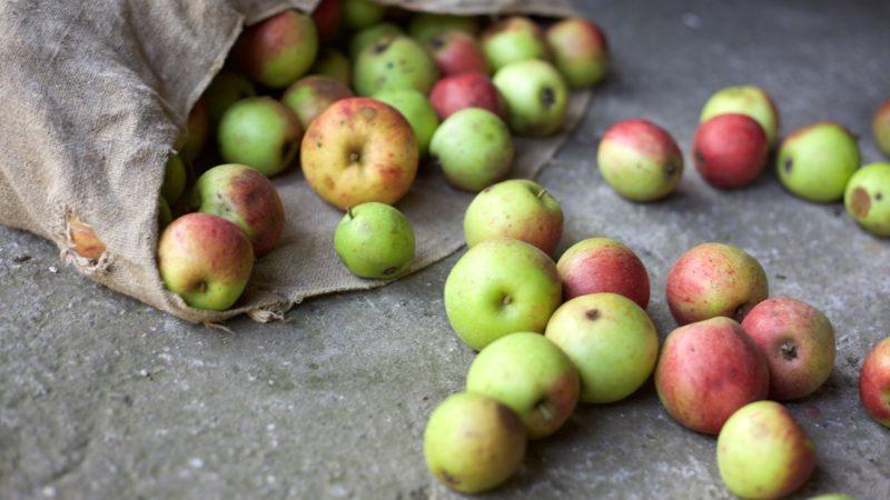 Lebensmittel mit Mäkeln lassen sich weniger gut verkaufen – das fördert die Verschwendung. | © Pixabay