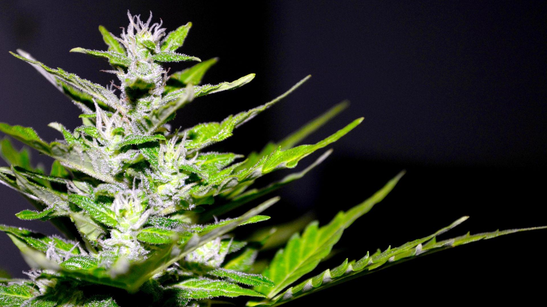 Kirche von England gibt medizinischem Cannabis ihren Segen