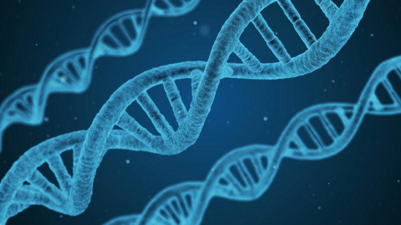 Kostbares Erbgut: DNA-Stränge  | © Pixabay/qimono, Pixabay License