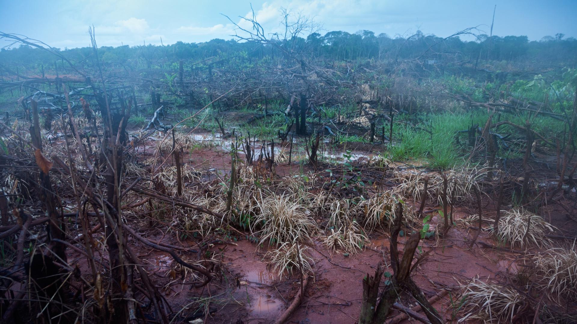 Brandrodung an der Transamazonica - einem Strassenprojekt quer durch das Amazonasgebiet | © Adveniat