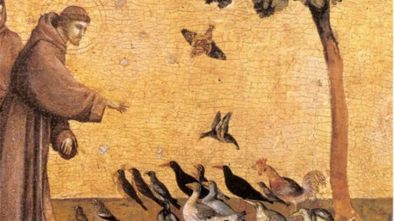 Saint François d'Assise parlant aux oiseaux Oeuvre de Giotto