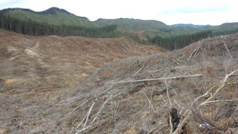 """Les """"crimes contre l'environnement"""" sont de plus en plus condamnés (Photo:Michael Coughlan/Flickr/<a href=""""https://creativecommons.org/licenses/by-sa/2.0/legalcode"""" target=""""_blank"""">CC BY-SA 2.0</a>)"""
