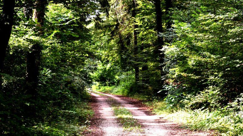 Via Francigena La solitude du chemin invite au pèlerinage intérieur | © Jacques Berset