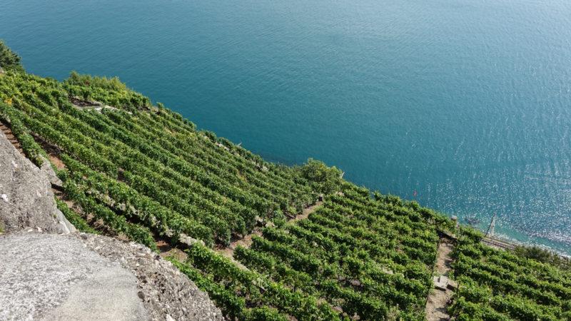 Lavaux: quand les vignes plongent dans le lac Léman   © Maurice Page