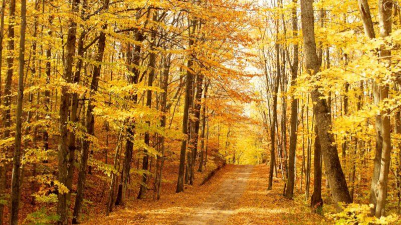 Novembre ne serait-il pas un mois lumineux? | © Jose Alvarez/Flickr/CC BY-SA