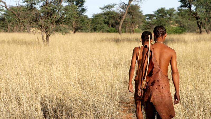 Menus, agiles, endurants, les bushmen vivent dans une symbiose parfaite avec leur environnement | DR