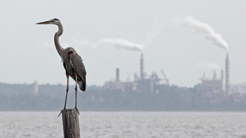 Le développement économique est souvent réalisé aux dépens des écosystèmes | © Dan Mooney/Flickr/CC BY-NC 2.0